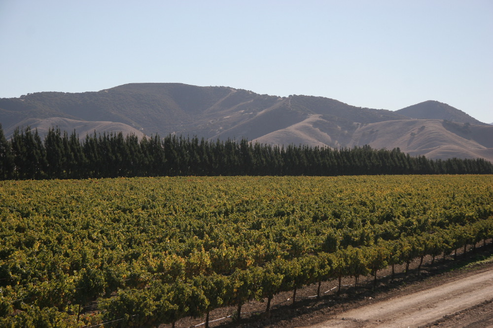 Beautiful photo of vineyards with mountains in the background.