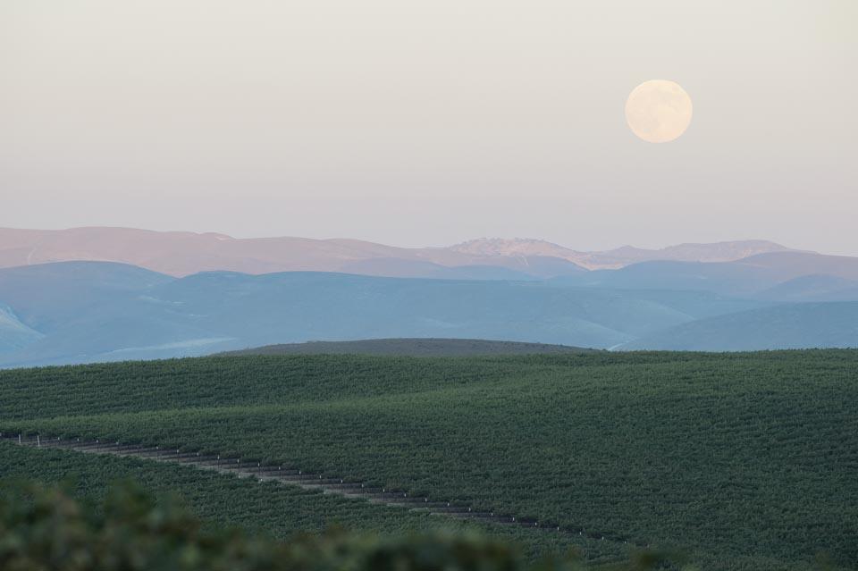 Beautiful photo of a vineyard at sunset.