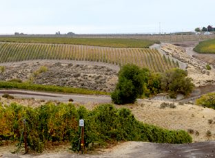 Precept Wines Vineyard.