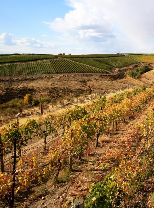 A vineyard in Washington Wine Country.
